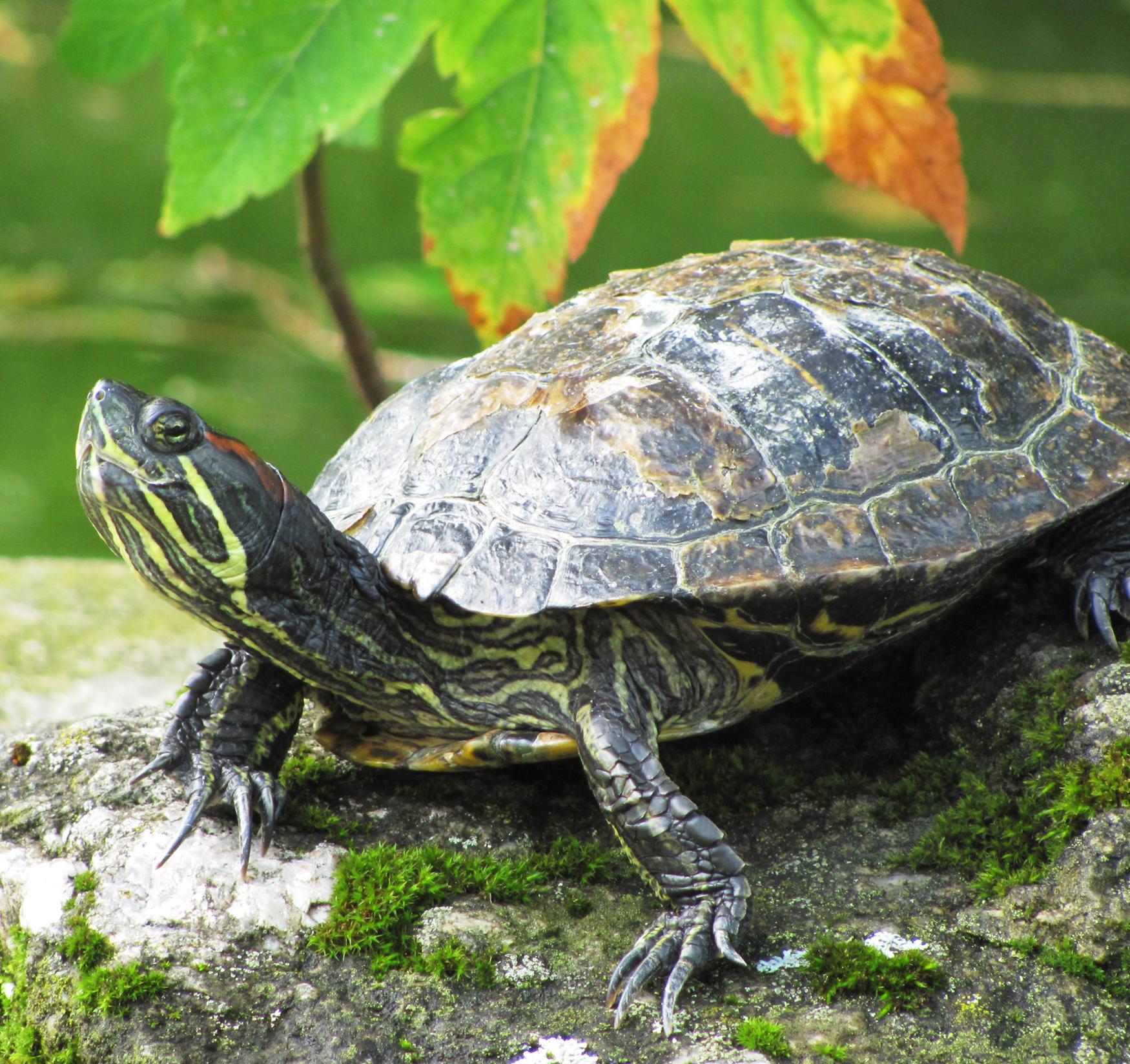 Buy the Teenage Mutant Ninja Turtle Toys, Not the Turtles ...